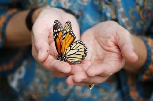 http://coaching-journey.com/wp-content/uploads/2013/04/transformation-change-butterfly-cocoon-e1367227371235.jpg